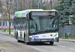 Narodowe Święto Niepodległości ‒ zmiany w kursach autobusów MZK oraz w organizacji ruchu